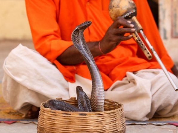 Neuspávejte hady. 5 tipů, jak uděláte super prezentaci
