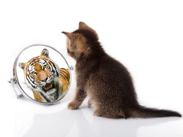 Proč ve vás personalista nevidí to, co v sobě vidíte vy